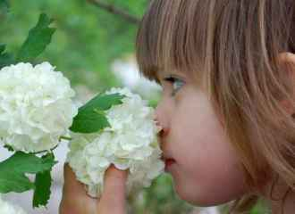 Girl smells hydrangea by pressing her nose into flower