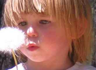 Young girl blows dandelion after making wish